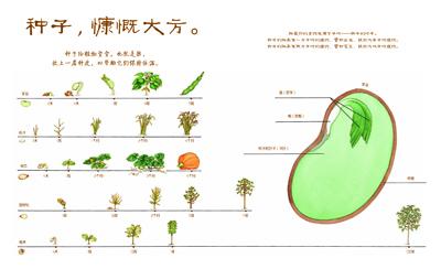 植物生长过程图画步骤